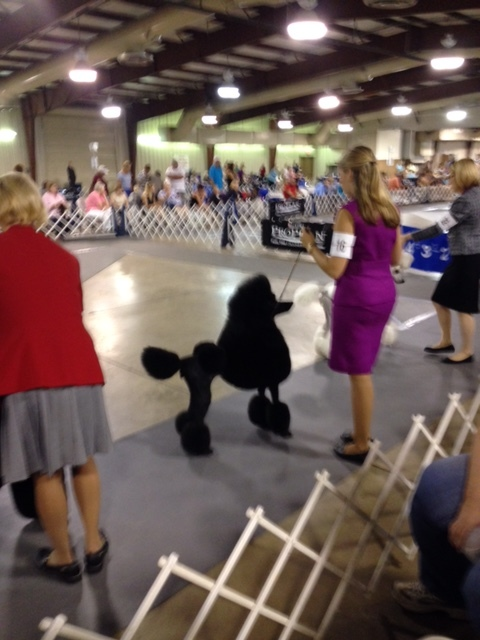 Titusville best show dogs